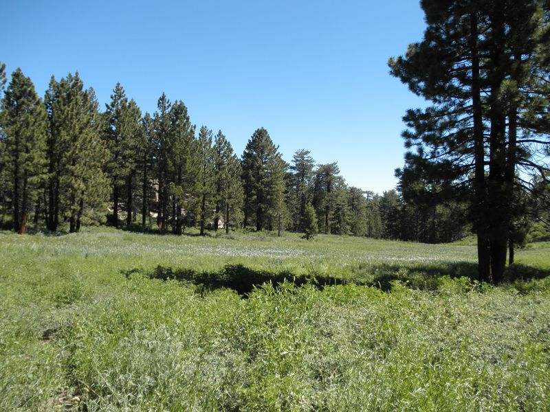 cheap land lots and acreage realestate cheap land you