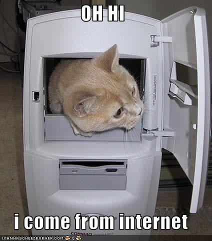 Funny-pictures-cat-comes-from-internet