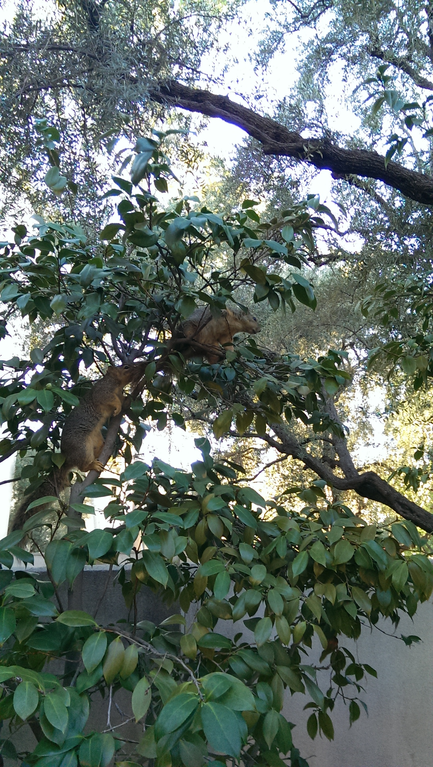 squirrels of caltech a not so artsy photojournal caltech
